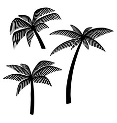 set hand drawn palm tree design element vector image
