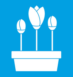 Tulips in box icon white vector