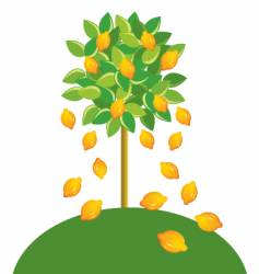 lemon tree vector image