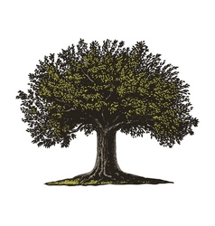 Engraved Tree vector image