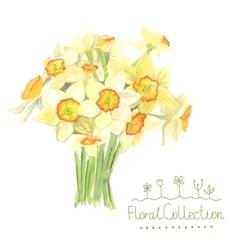 A bouquet watercolor narcissus vector