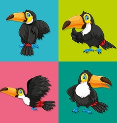 Toucan in four frames vector