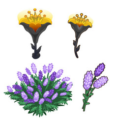 Two bouquets flowers purple and shining yellow vector