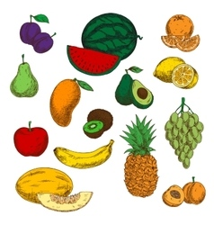 Assortment of ripe and sweet fruits sketches vector