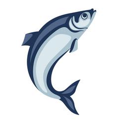 Herring fish pacific sardine vector