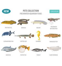 Unusual freshwater aquarium fish breeds icon set vector
