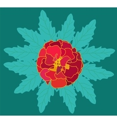 Beautiful blooming flower tagetes with green vector