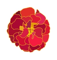Beautiful Blooming Flower Tagetes on White vector