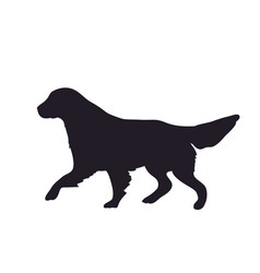 dog runs silhouette vector image