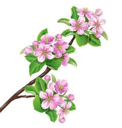 Flowering branch1 vector