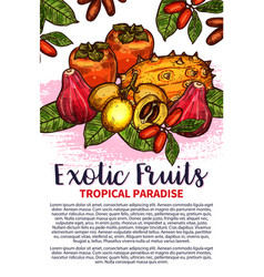 Fruits exotic tropical fruit sketch poster vector