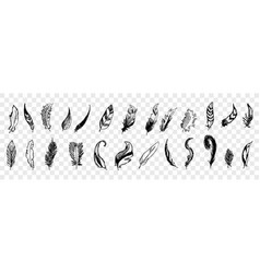 hand drawn bird feathers doodle set collection vector image
