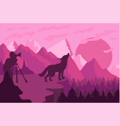 Photographer photographs the wild wolf in nature vector