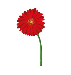 red flower on white background natural elegance vector image