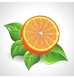 yummy orange on white background with green leaves vector image