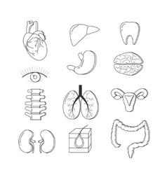 set of human body organs Anatomy design vector image vector image