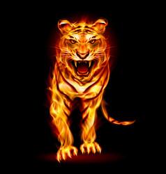 fire tiger on black background for design vector image vector image
