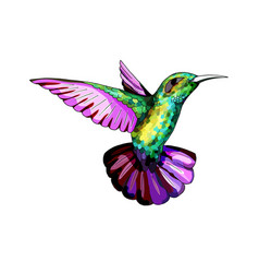 small hummingbird exotic tropical colibri animal vector image