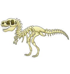 tyrannosaurus skeleton image vector image