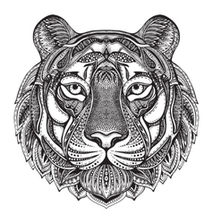 Hand drawn graphic ornate tiger vector image vector image