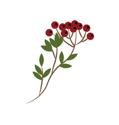 berry branch vector image