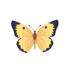 butterfly yellow color vector image
