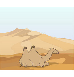 camel stands in the desert vector image
