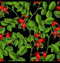 Dogrose seamless pattern black background vector