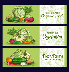 farm vegetables sketch banners veggies vector image