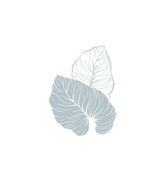 Philodendron monstera leaves vector