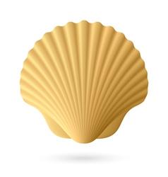 Scallop seashell vector image vector image