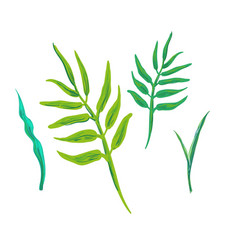tropical leaves jungle leaves set isolated vector image