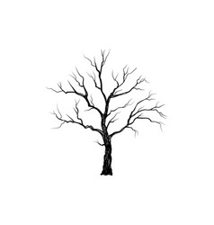 tree without leaves nature sign floral winter vector image