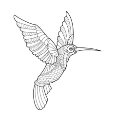 Hummingbird coloring book for adults vector image vector image