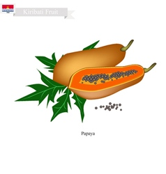 Ripe papaya a famous fruit in kiribati vector