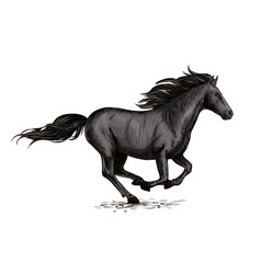 Black horse running on racing sport vector
