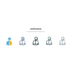Esophagus icon in different style two colored vector