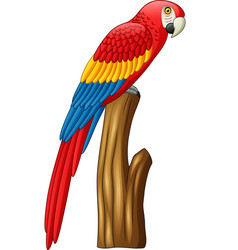 macaw on a branch vector image