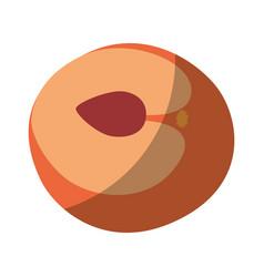 peach sweet fruit vector image