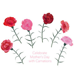 set of assorted carnations vector image