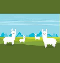 cute cartoon alpaca flat vector image
