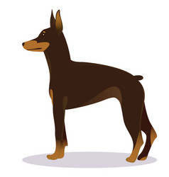 Doberman pinscher dog brown vector