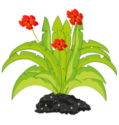 exotic plant with red flower on ground vector image