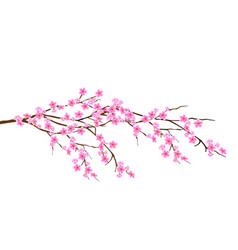 horizontal spring branch of cherry blossoms vector image