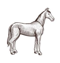 Horse handdrawn artwork animal sketch vector