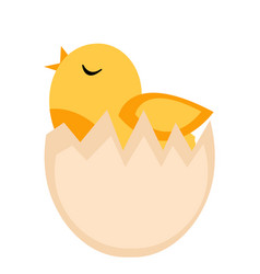 nestling hatched from egg yellow chicken icon vector image