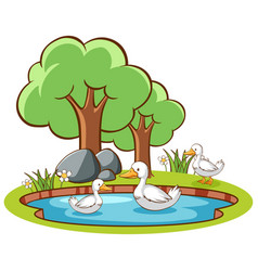 Isolated picture ducks in pond vector