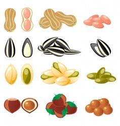 Nuts set vector