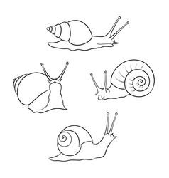 Set snails in contours vector