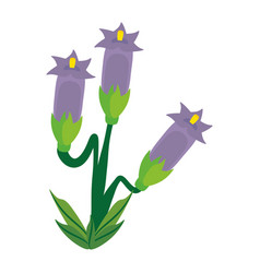 Crocus flower spring image vector